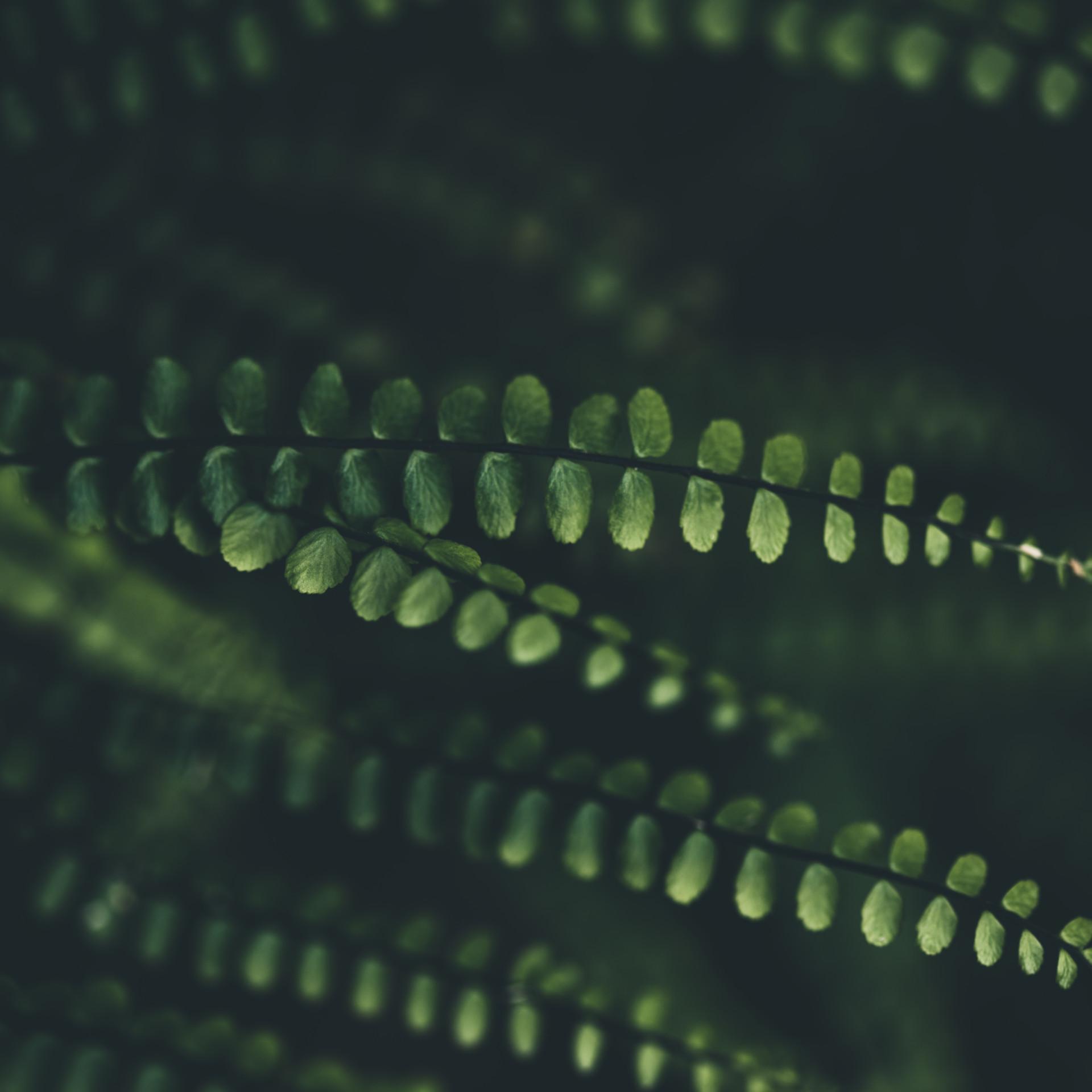 Kleine grüne Blätter