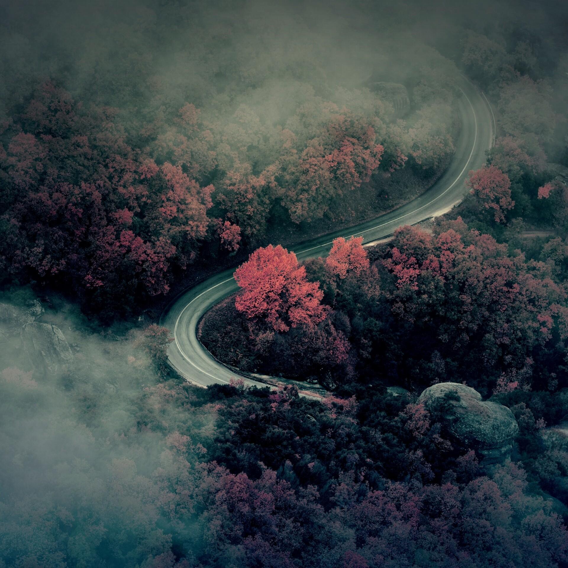 Strasse durch den Wald mit Nebel