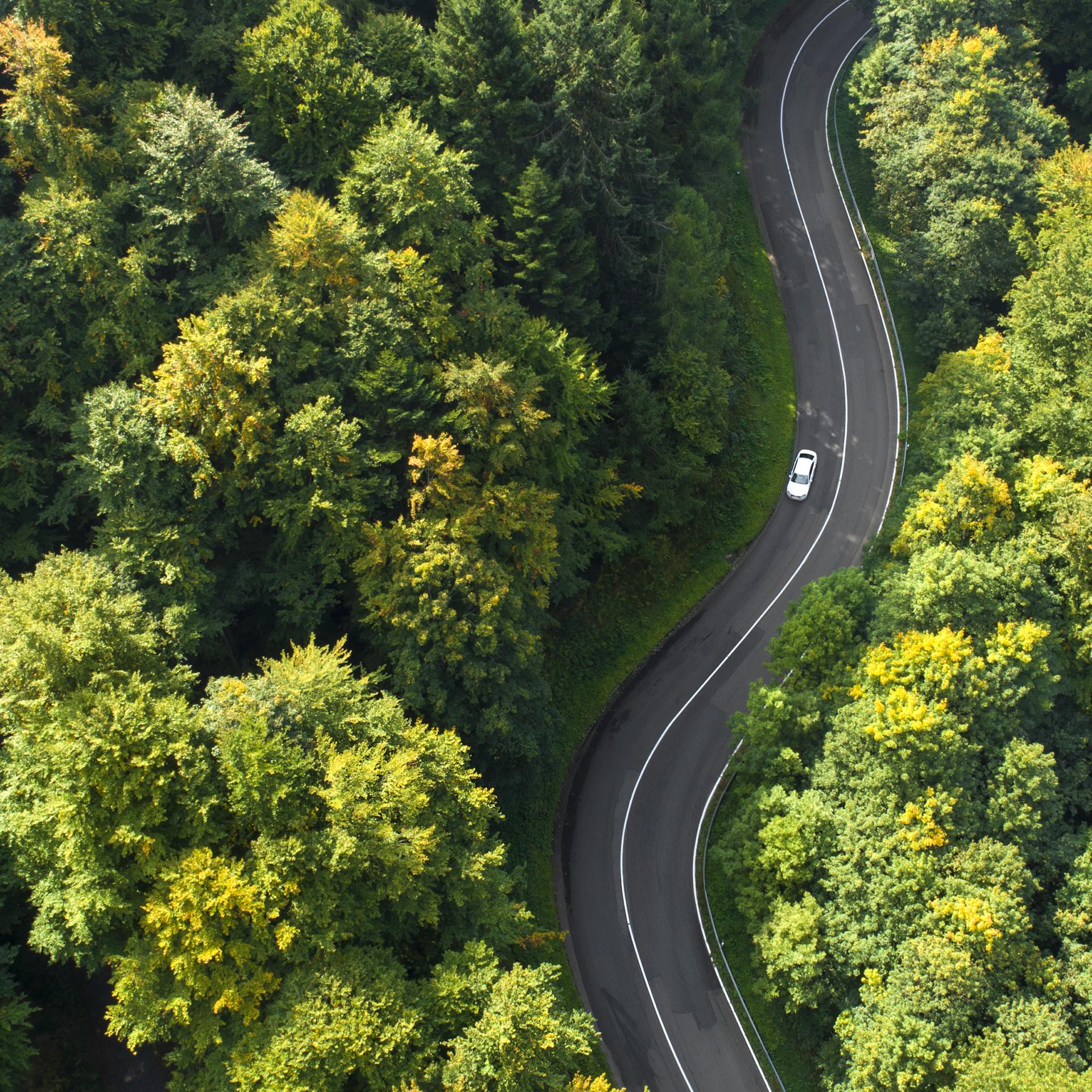 Straße durch den Wald mit Auto
