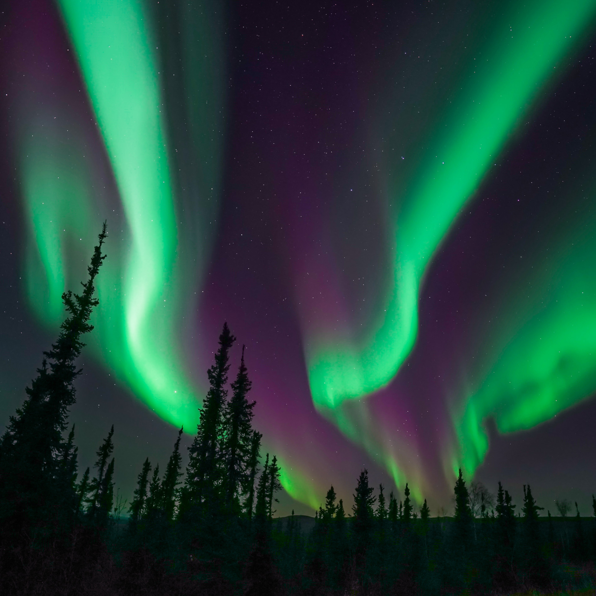 Polarlichter über einem Wald